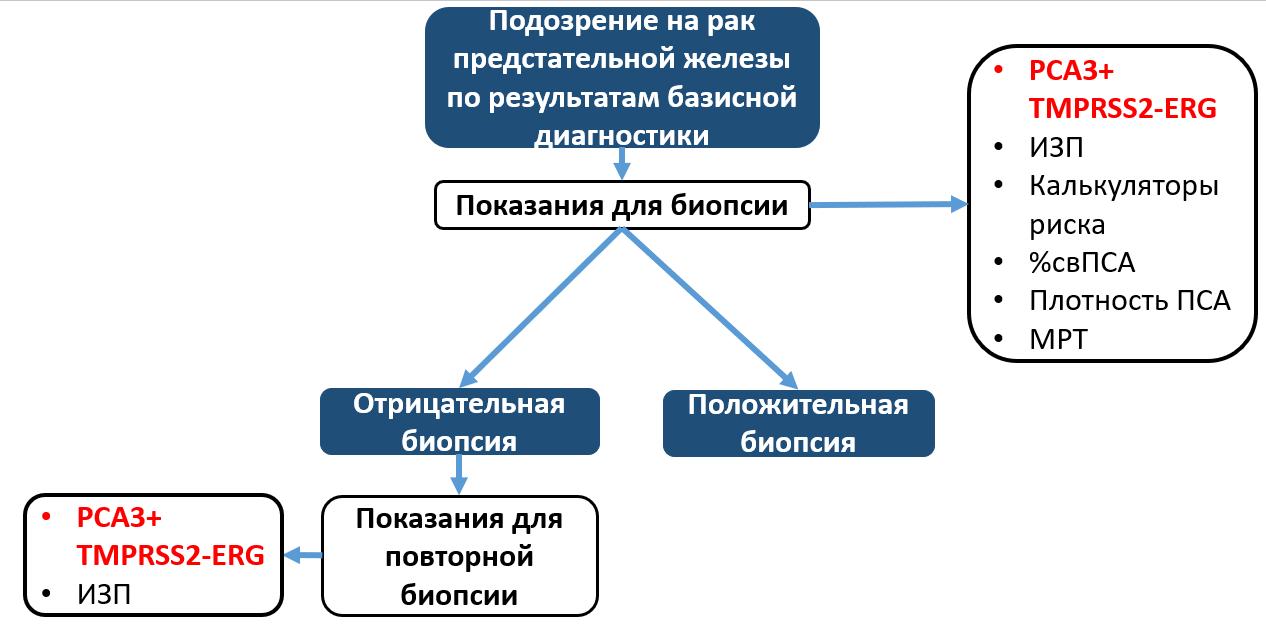 Алгоритм обследования пациентов согласно рекомендациям EAU, NCCN
