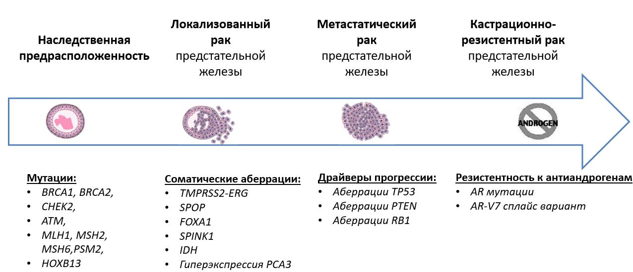 Молекулярные закономерности развития рака предстательной железы