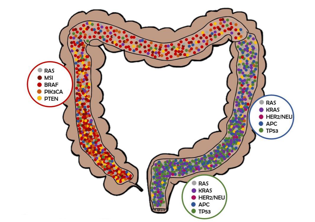 Распределение мутаций в зависимости от локализации опухоли