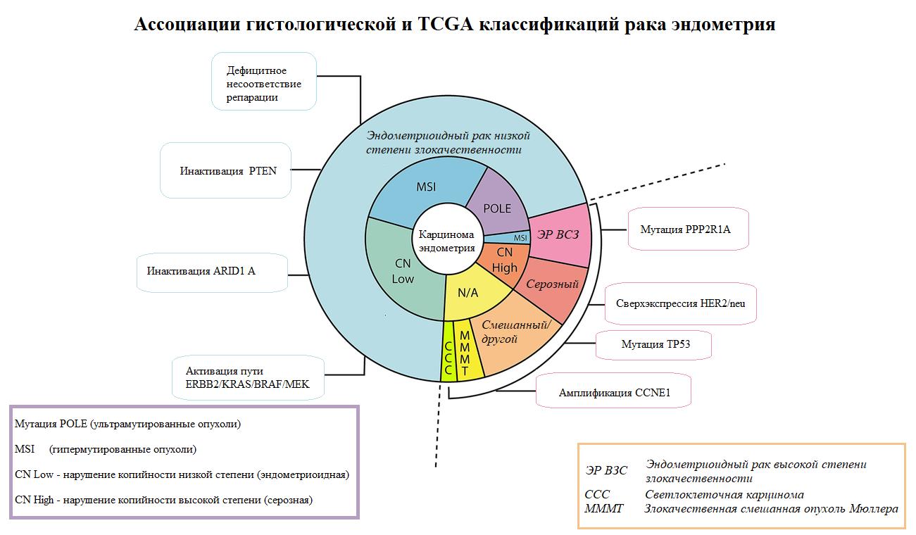 Ассоциации гистологической и TCGA классификаций рака эндометрия