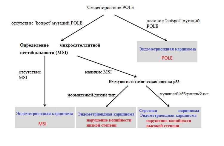 Секвенирование POLE